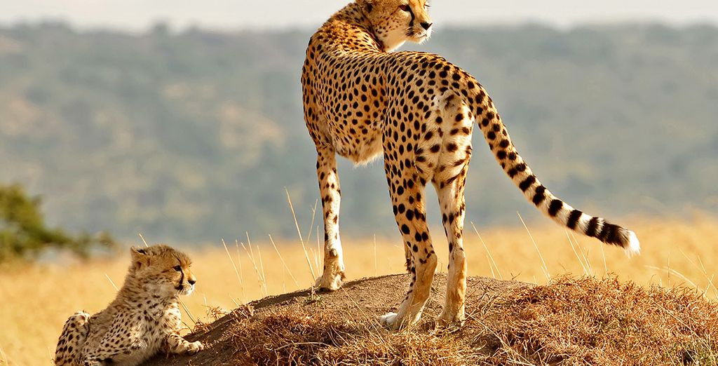 Swahili Beach Resort 5* & Safari Voyage Privé: Bis zu -70%