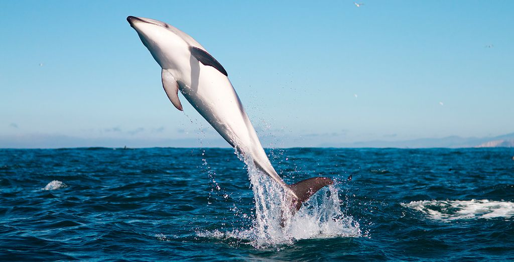 Annäherung an Meerestiere aus Neuseeland