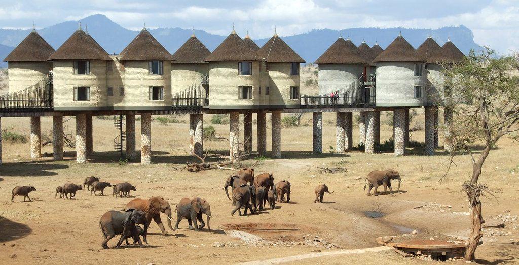 Während der Safari übernachten Sie in der Saltlick Lodge