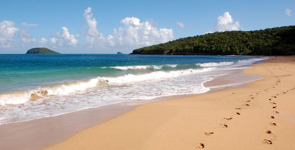 En Guadeloupe !