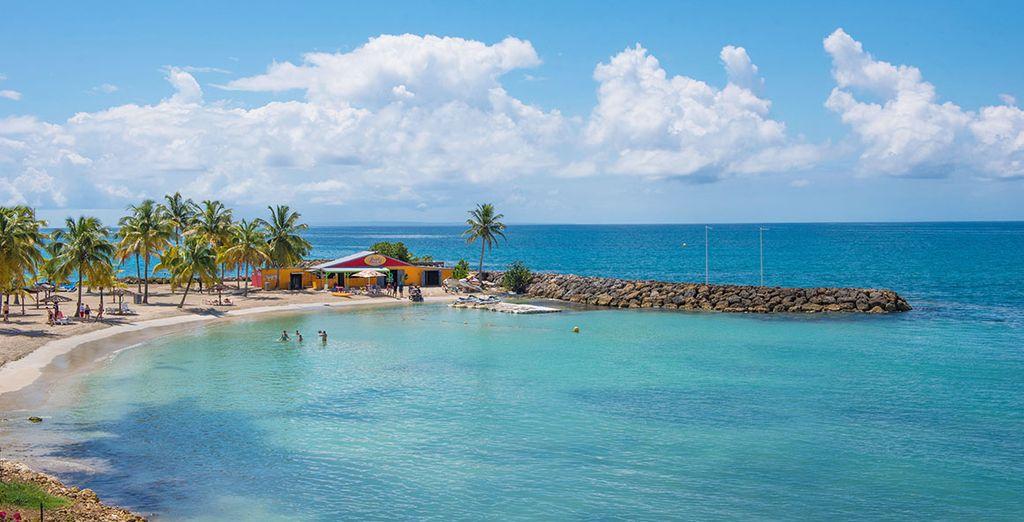 Blaues Meer, soweit das Auge blicken kann... Das und mehr erwartet Sie in Guadeloupe