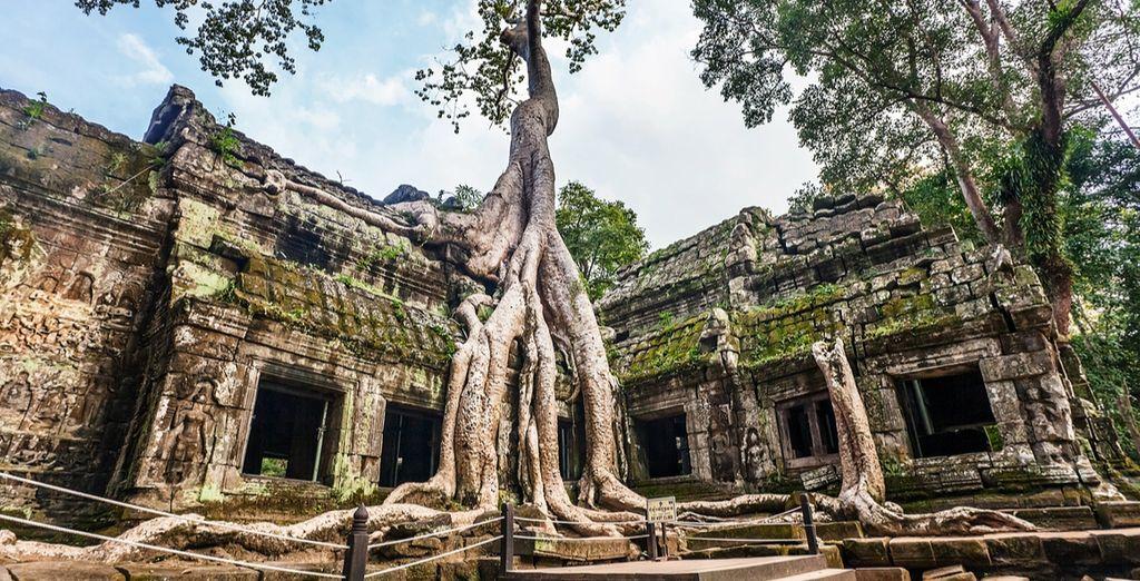 Ta Prohm und die Wurzeln der mächtigen Feigenbäume