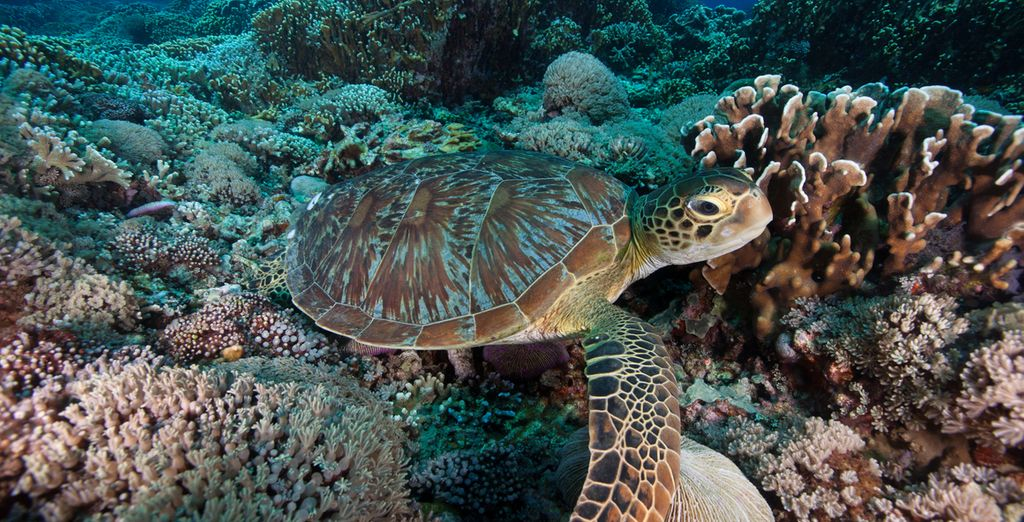 Entdecken Sie die faszinierende Unterwasserwelt