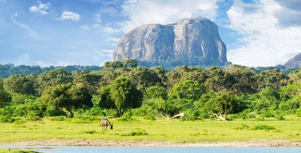 Machen Sie sich auf den Weg die Wunder Sri Lankas zu entdecken