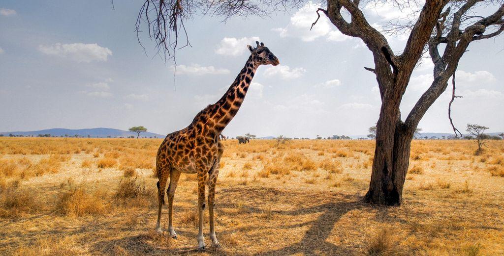 Im Kruger Park