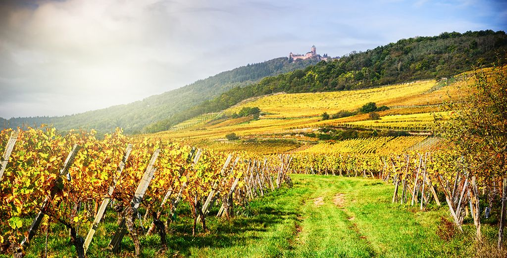 Farbenfrohe Weinberge