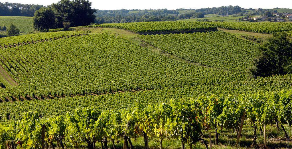 Entdecken Sie die Weinfelder rund um Bordeaux