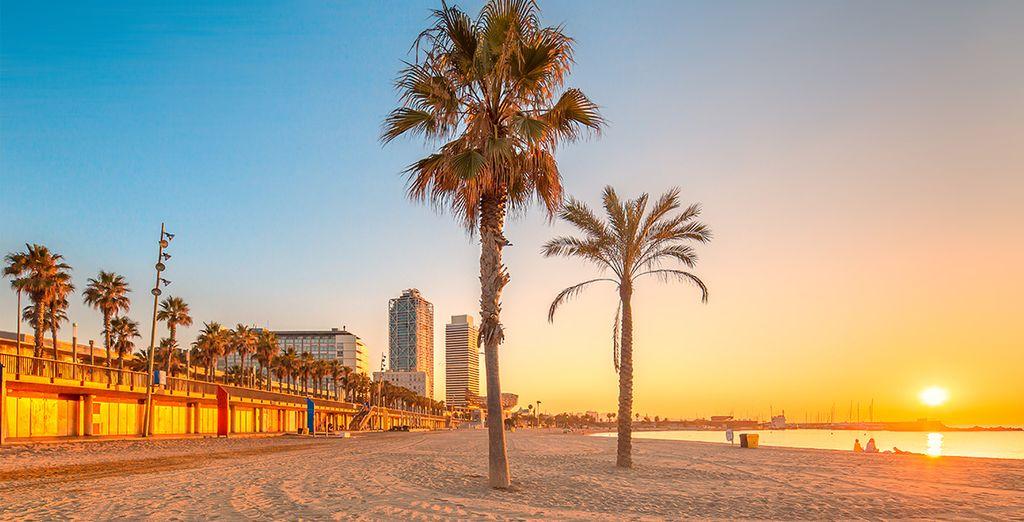 O tomando el sol en la bonita playa de la ciudad