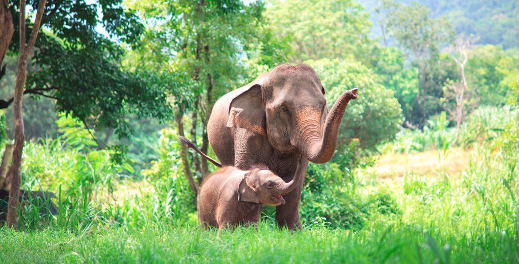 En el segundo paso de la compra podrás incluir una excursión en elefante