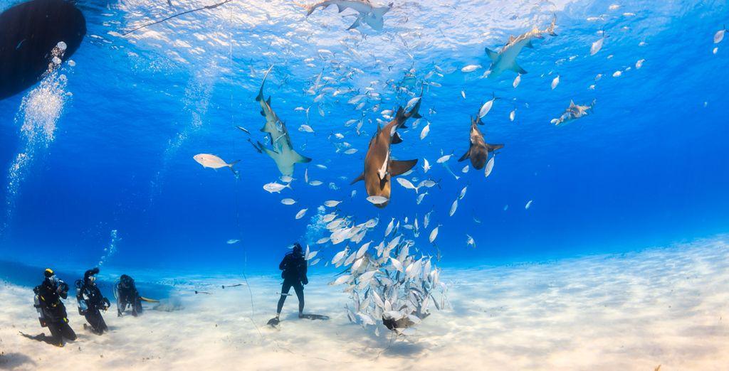 Conozca su espectacular fauna y flora marinas