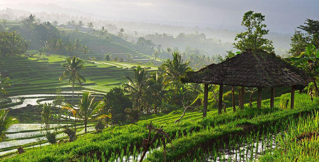 Bellos paisajes verdes se extienden en su área
