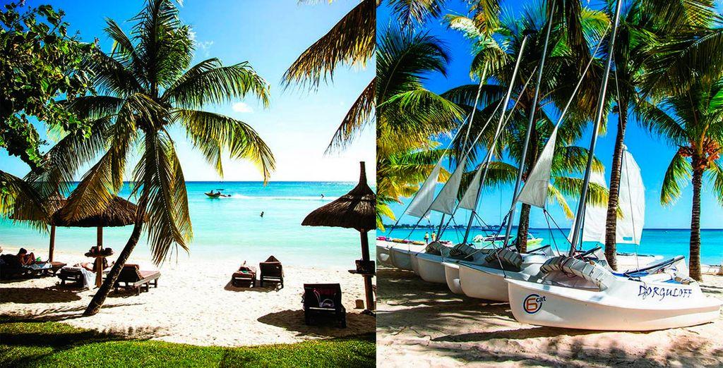 Rodeado de palmeras y arena blanca