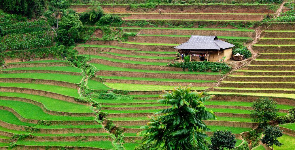Conozca el extraordinario Vietnam