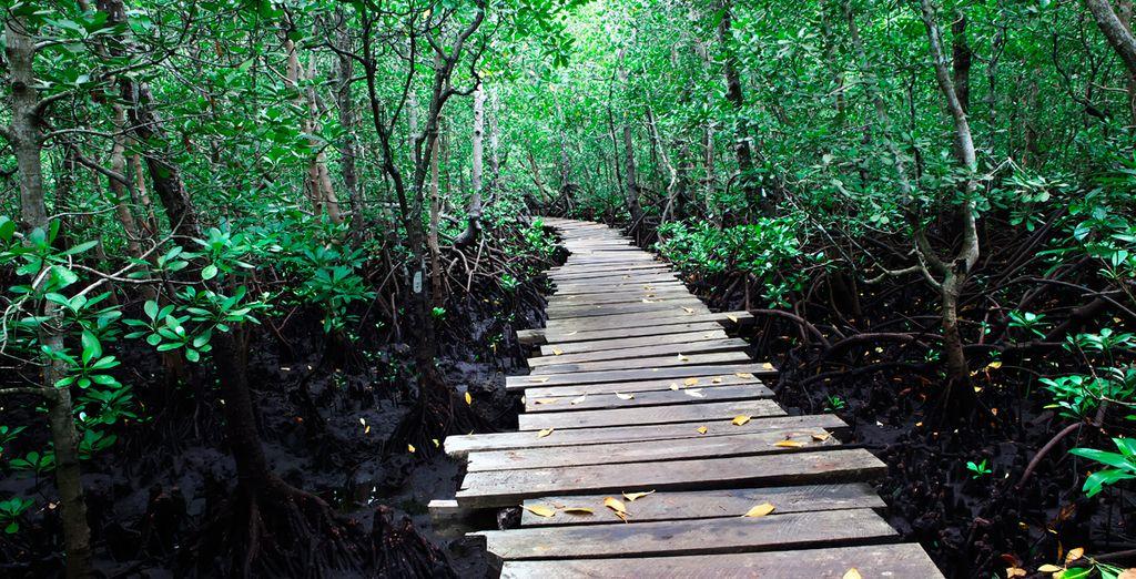 Zanzíbar es la isla de las especias, descúbrala