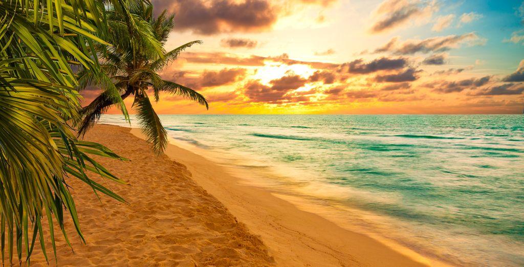 Vive la Riviera Maya