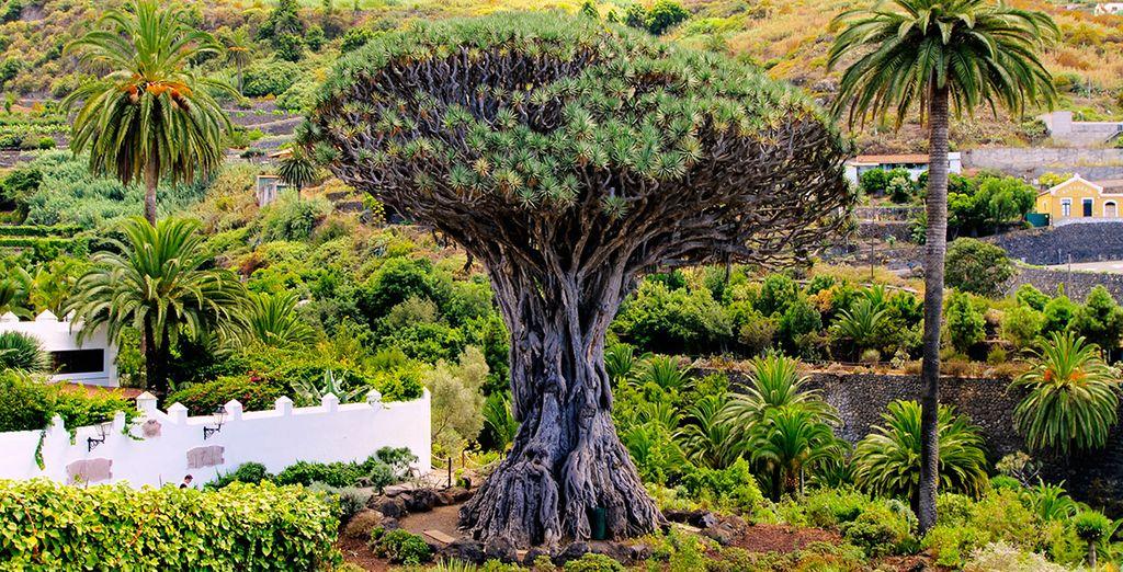 Ofertas de viajes vuelos más hoteles, vacaciones en Las Islas Canarias, Tenerife, Gran Canaria, Fuerteventura, Lanzarote