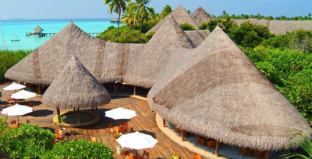 Coco Palm Dhuni Kolhu un magnífico resort 4*