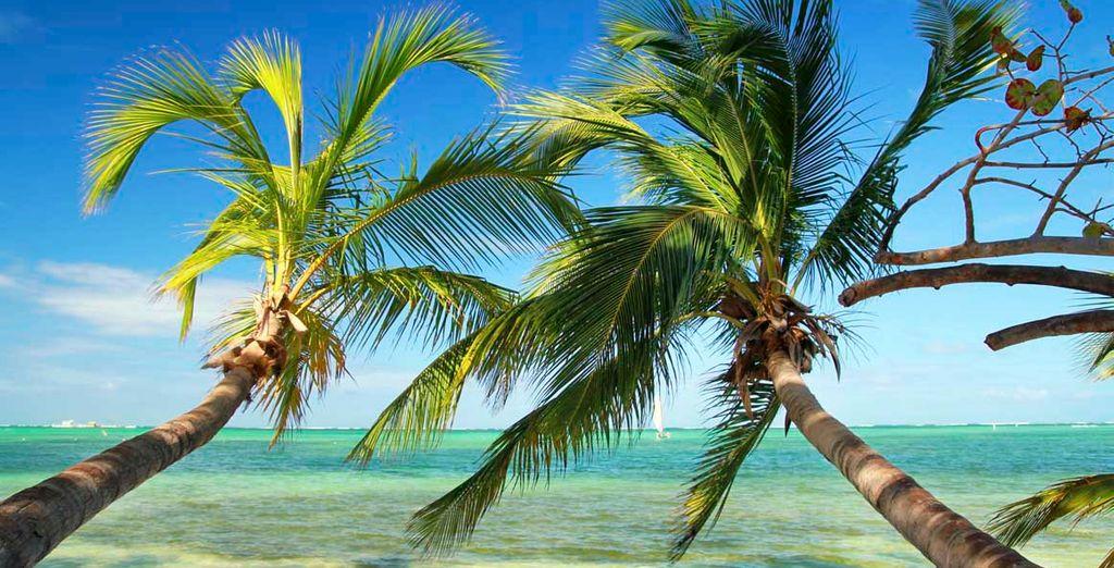 El paraíso está en Punta Cana
