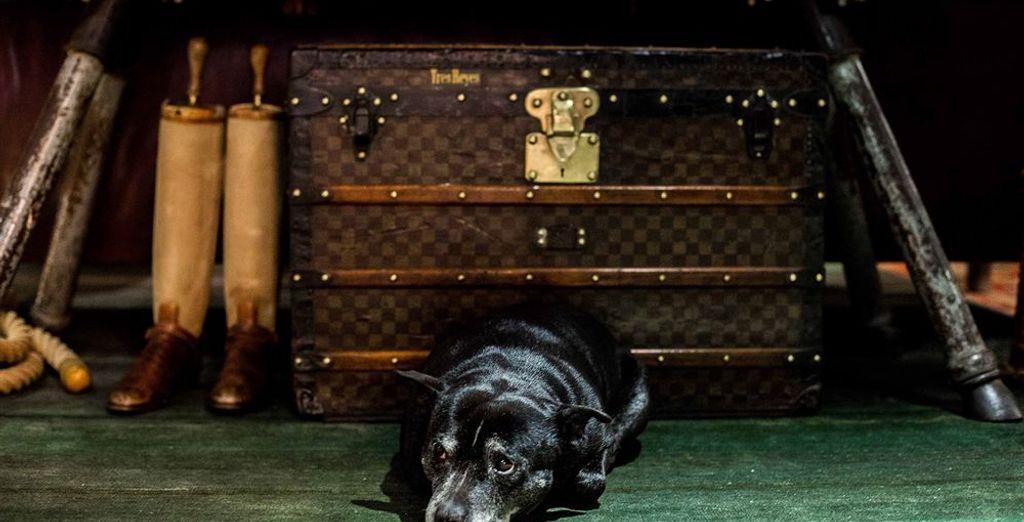 Las mascotas se admiten bajo petición y suplemento