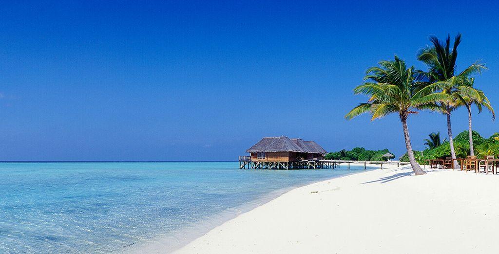 ... e infinitas playas de arena blanca, te esperan en Isla Mauricio