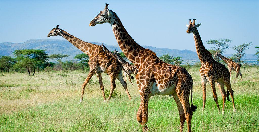 Kenia te regalará paisajes magníficos