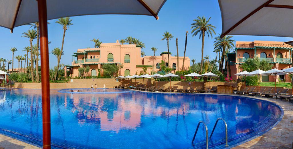 Disfruta un buen baño y del sol desde la piscina
