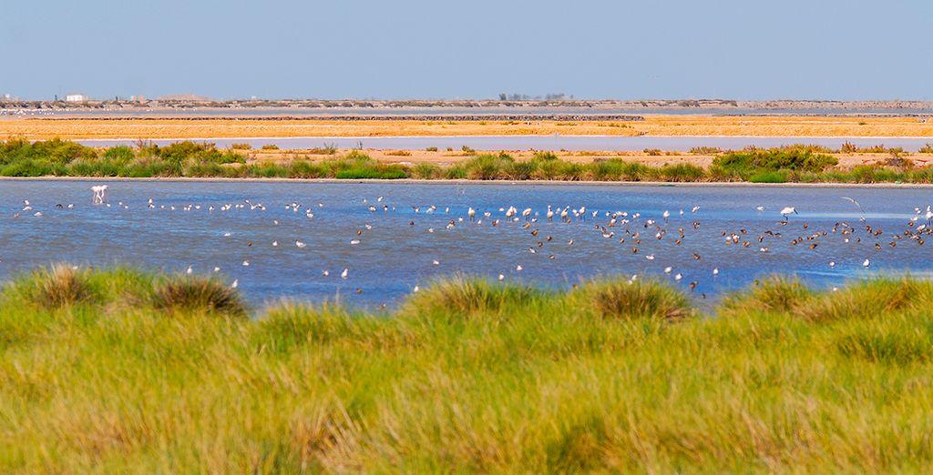El Parque Nacional de Doñana, un paraje de gran belleza natural