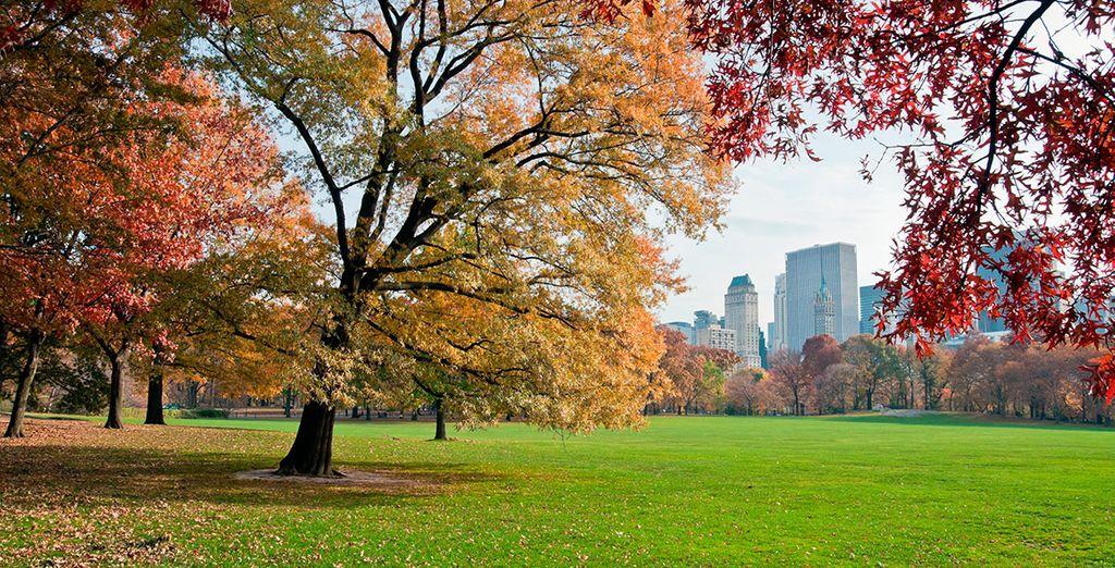 Pasea por Central Park, el pulmón de Manhattan