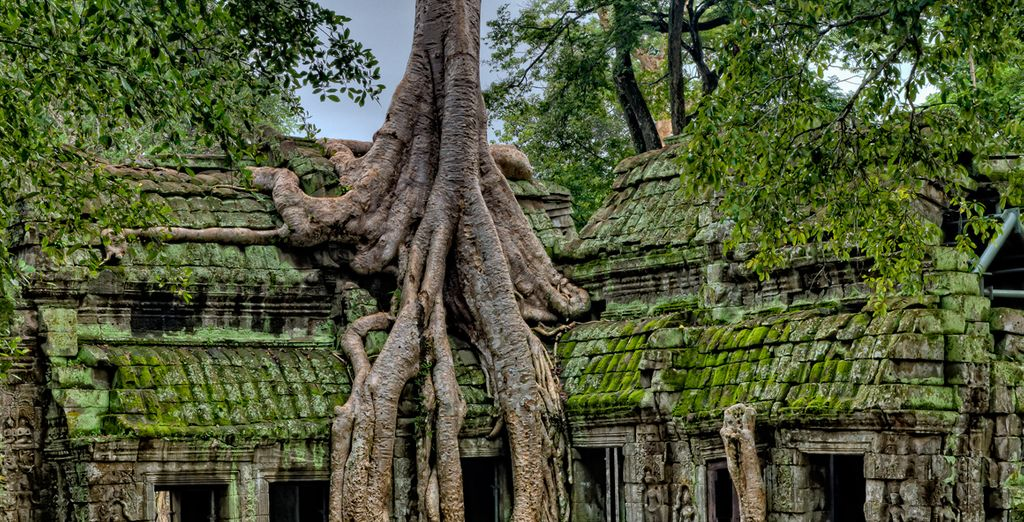 Visita los templos milenarios de Angkor