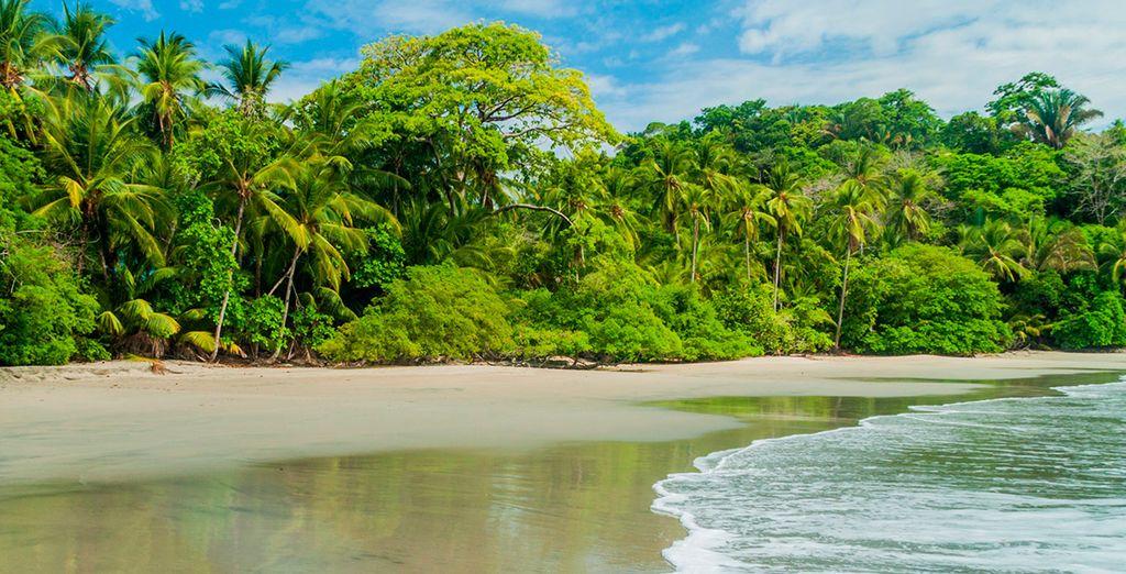 Tu último destino, Manuel Antonio, donde visitarás uno de los parques nacionales más famosos de Costa Rica