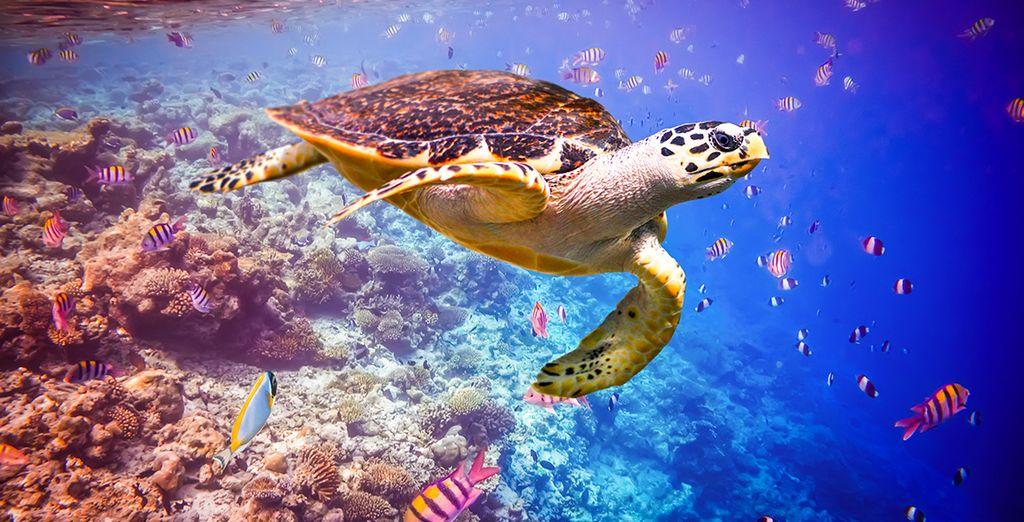 O bucea bajo las olas para explorar la increíble vida marina