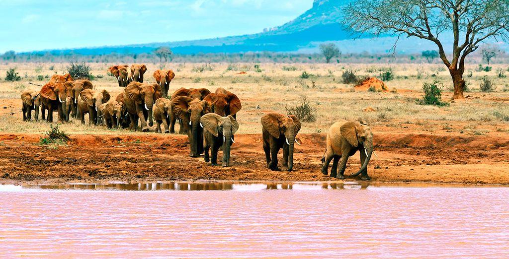 Realizarás un espectacular safari