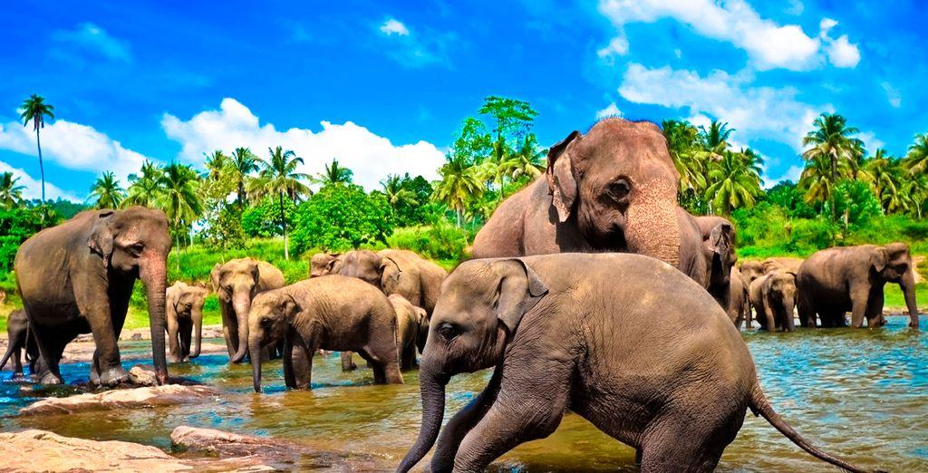 Visite el Parque Nacional de Yala