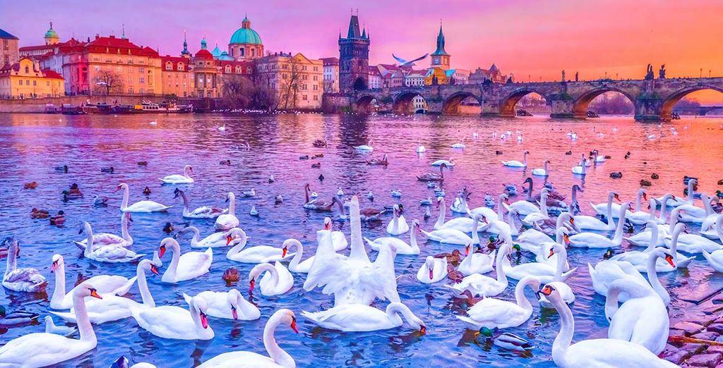 Bienvenido a tu escapada 5* en Praga