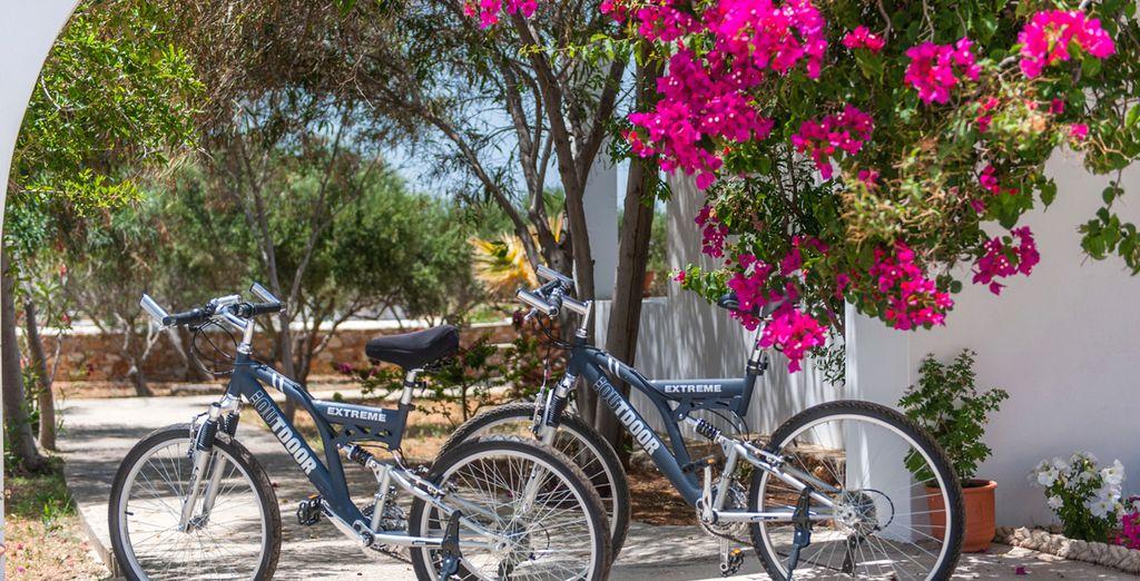 Recorra la zona en bicicleta