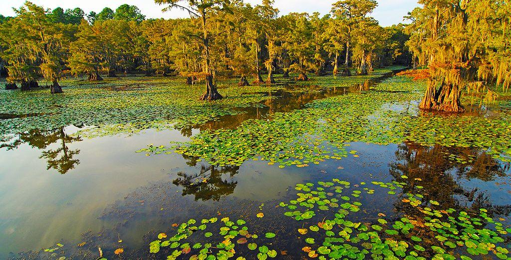 Suivez-nous en Louisiane, pour un autotour entre Jazz, Bayou et pays Cajun