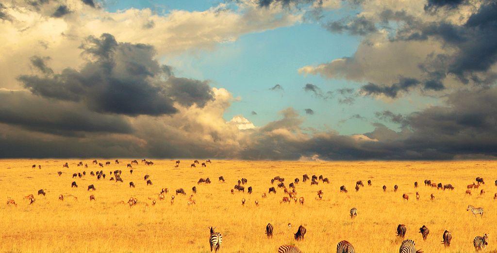 Et découvrez l'Afrique telle que vous l'avez imaginée au Serengeti