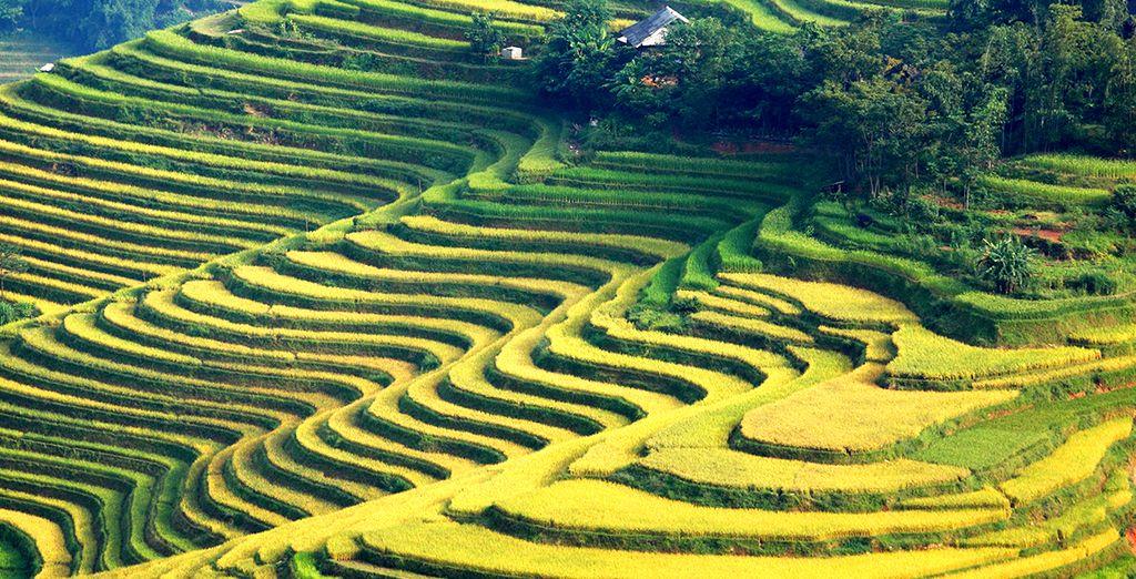 Le Vietnam vous attend pour quelques jours d'intense découverte