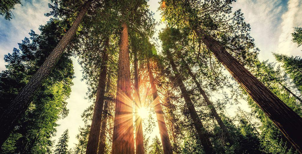 Vous serez éblouit par la beauté de Yosemite Park