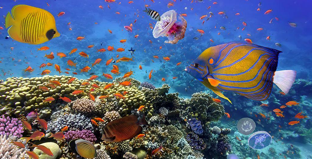 Plongée sous-marine à la découverte du récif coralliens des Seychelles