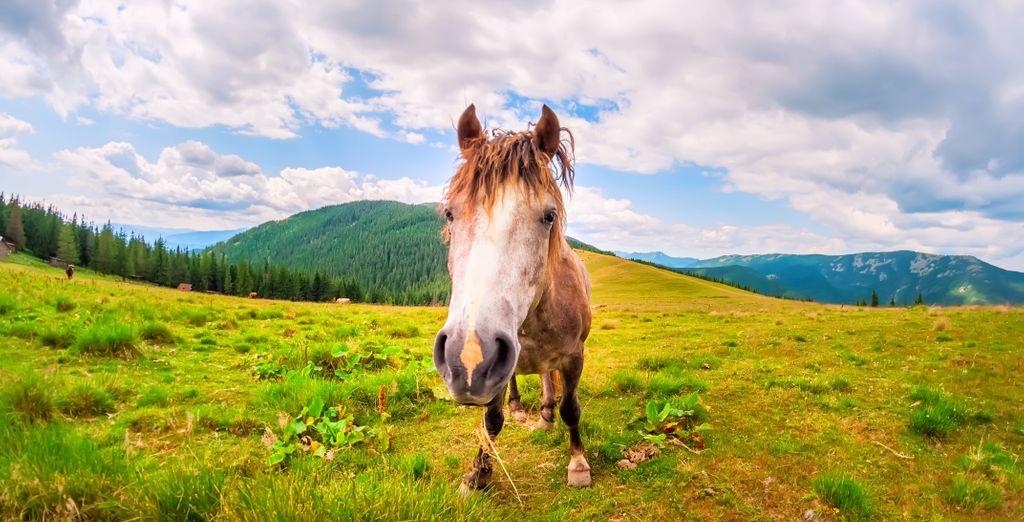 Vous pourrez y faire du cheval, et même venir à l'hôtel avec le vôtre, qui fait également hôtel équin !