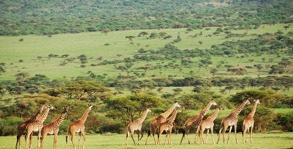 À la rencontre de la vie sauvage de Tanzanie