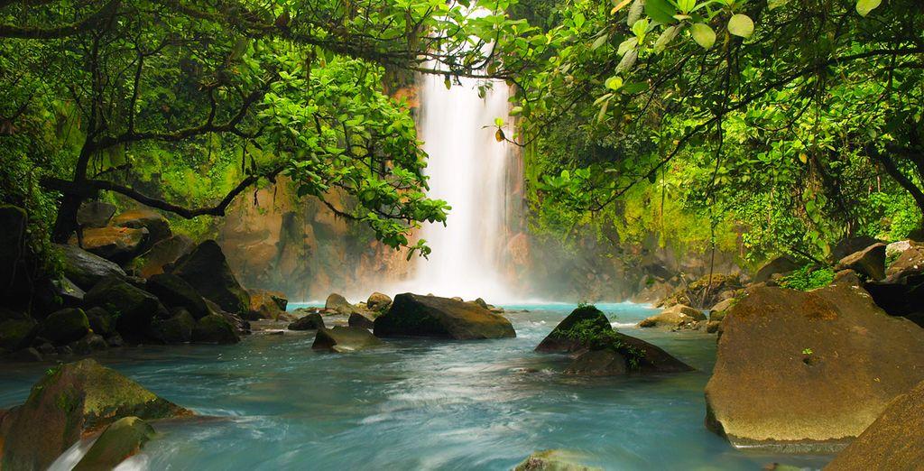 De vastes forêts luxuriantes...