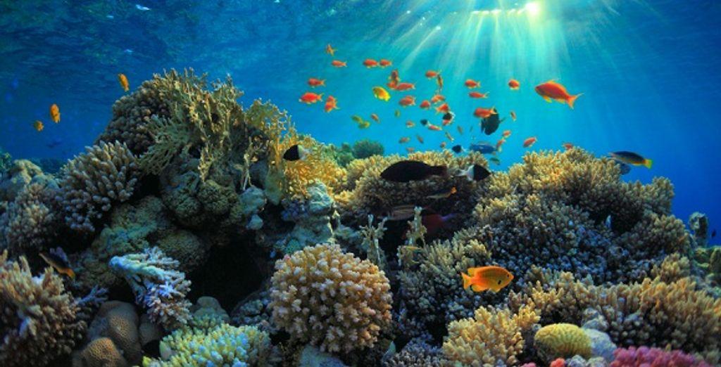 La mer Rouge et ses fonds marins sublimes
