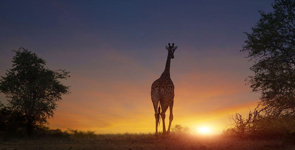 Safari de luxe