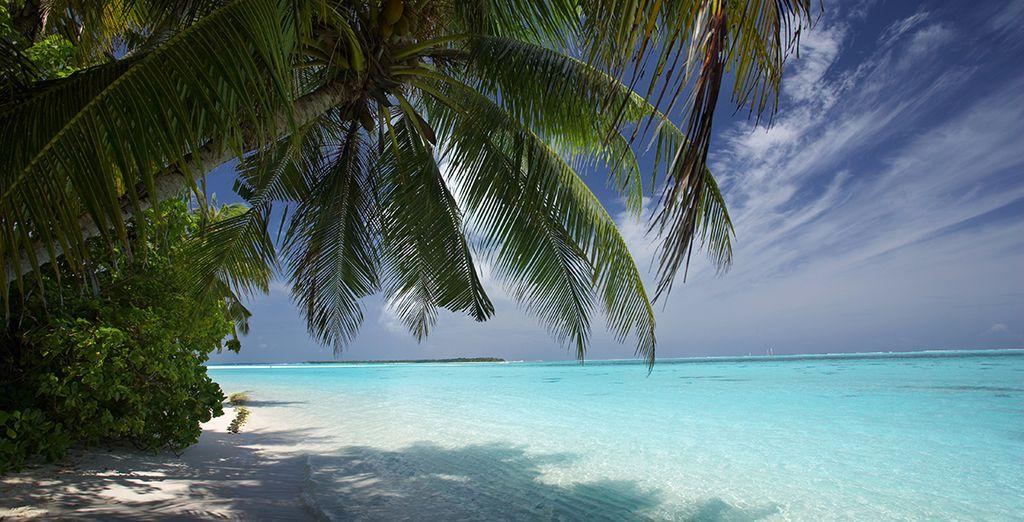 Bon voyage dans les eaux caribéennes !