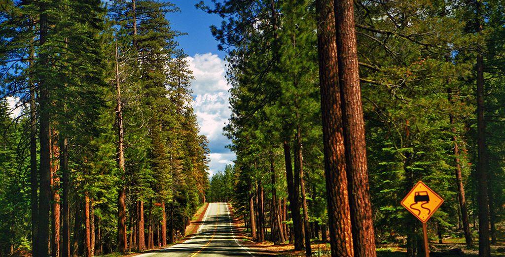 Suivis des paysages verdoyants de Yosemite...