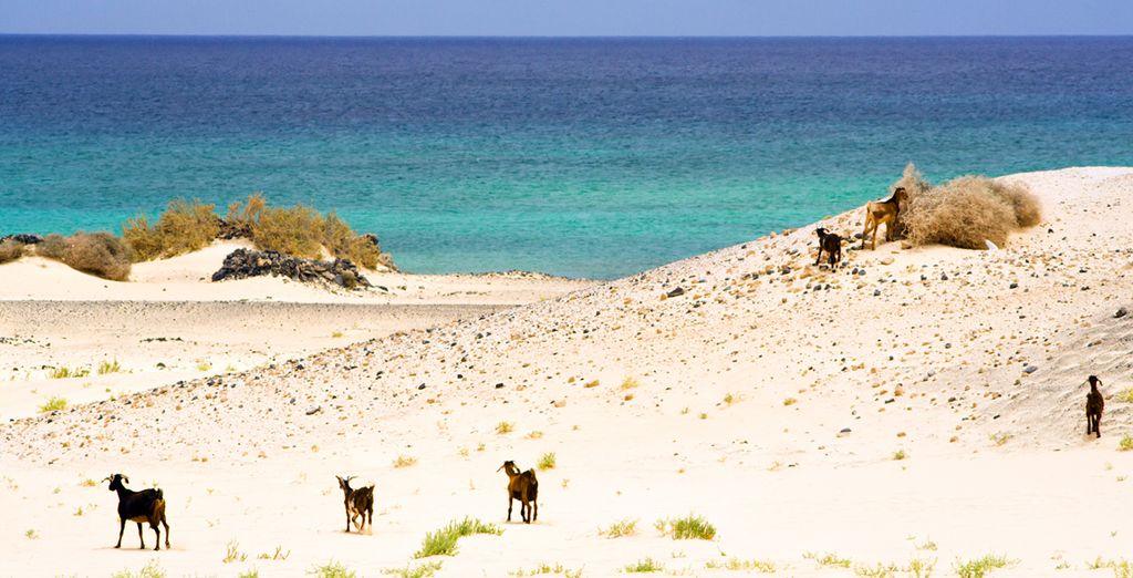 Vous découvrirez Jandia, un vrai petit paradis de dunes !