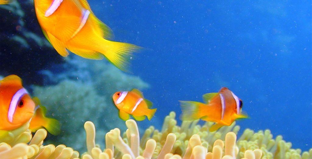 Ou la plongée sous-marine...