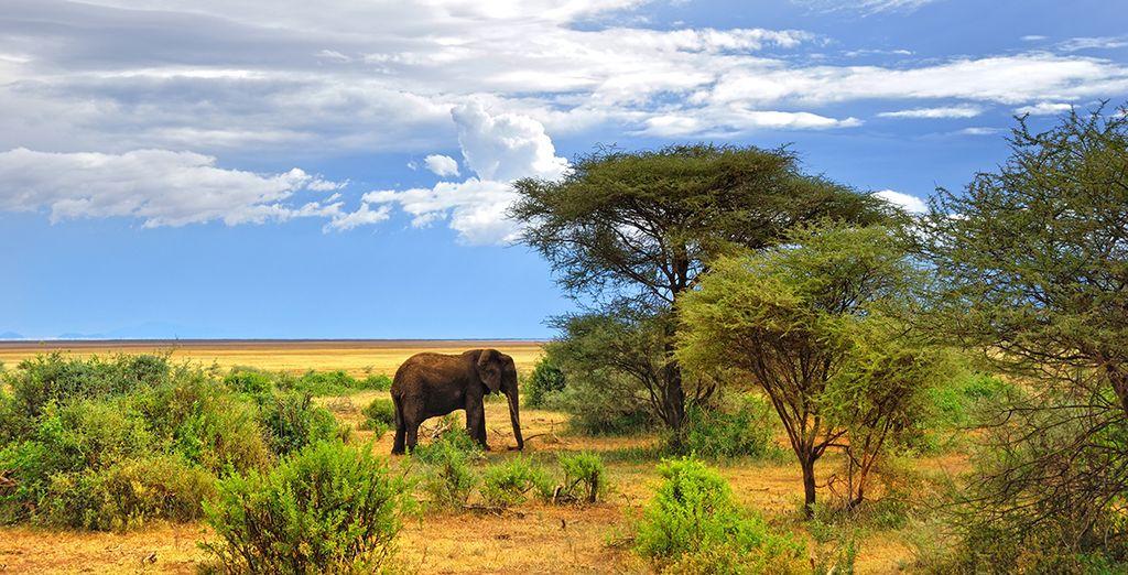 Du Serengeti...